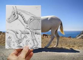 Horse Skelton