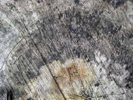 Organic Wood Texture