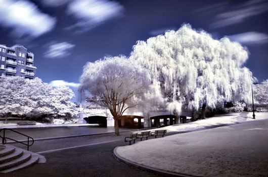 A different World in Infrared