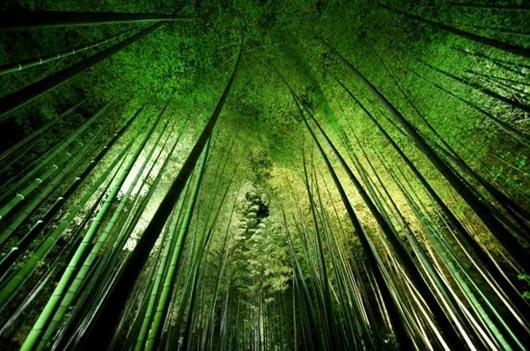 bamboonight